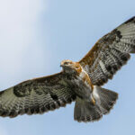 鷹のイメージ